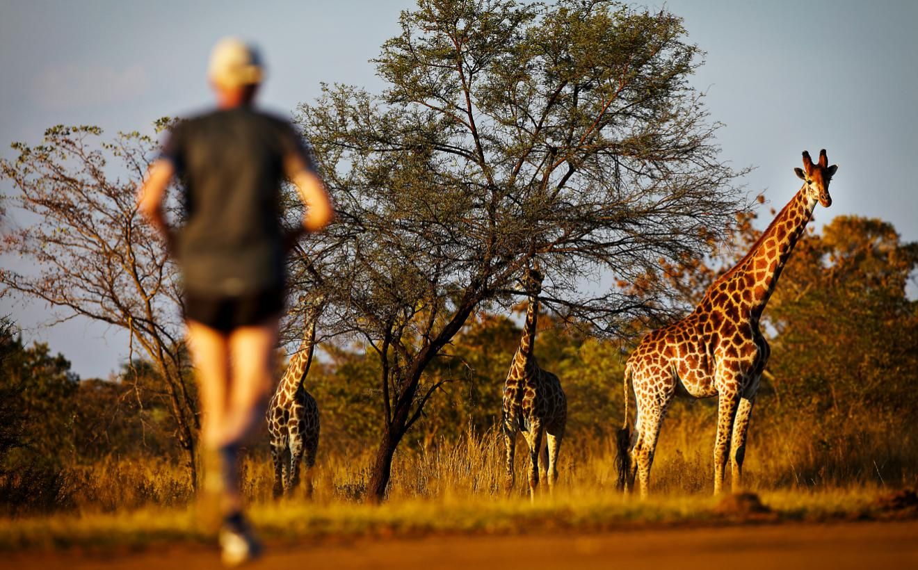 worlds quirkiest events SouthAfrica_BigFiveMarathon_RunnerAndGiraffe_045