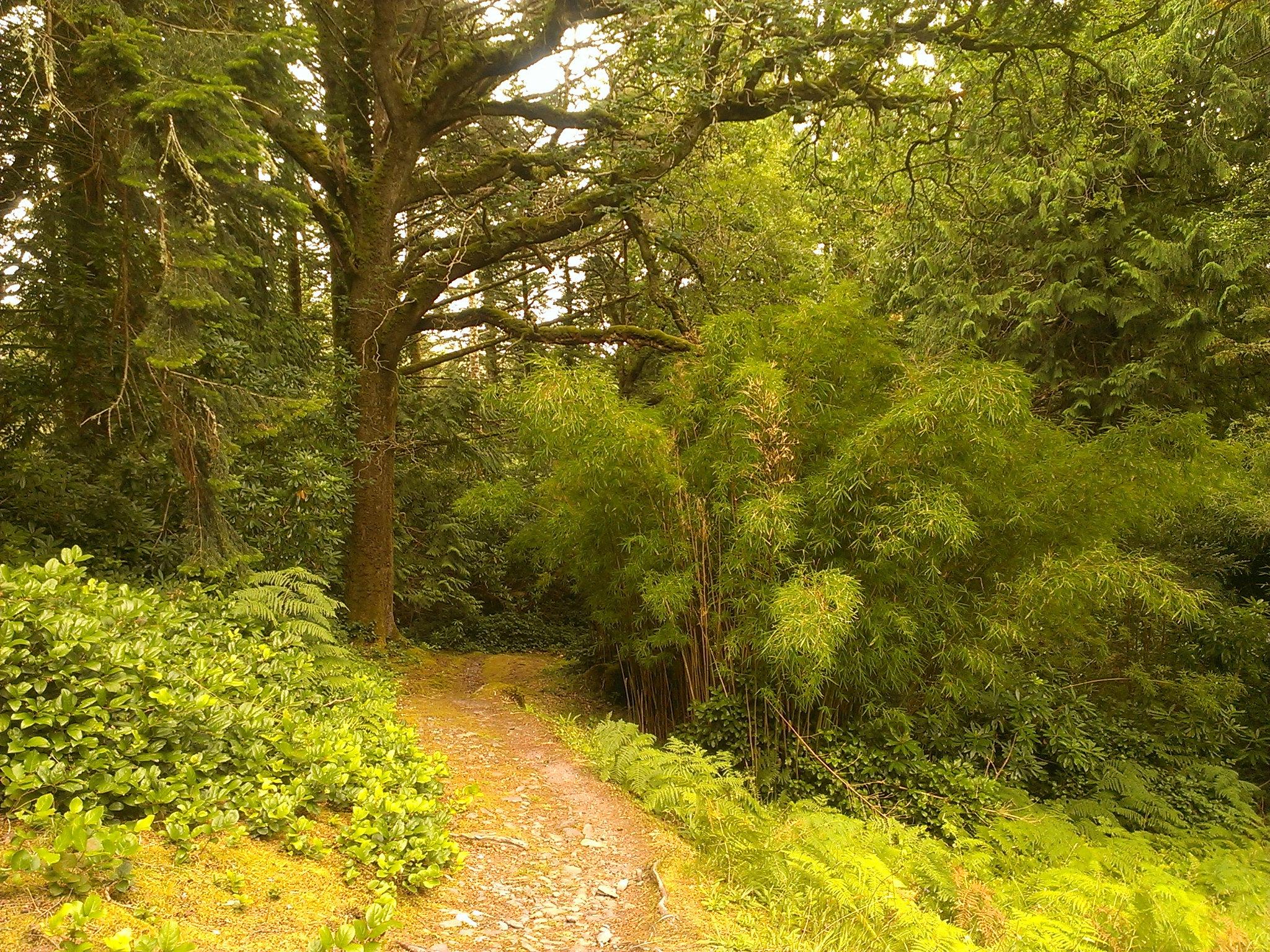 derreen gardens kenmare
