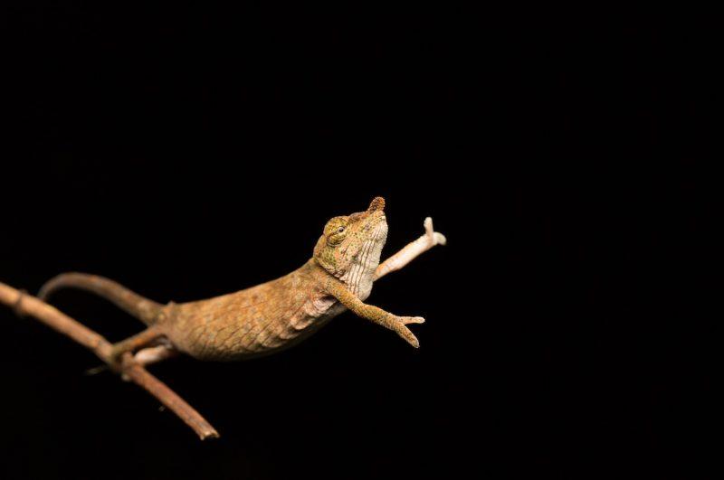 Jasmine Vink (Australia) © 'Chameleon dance'