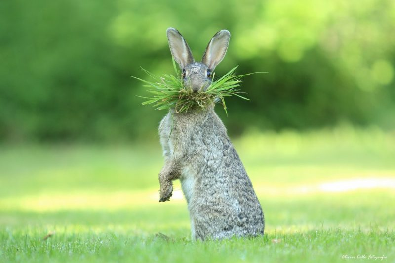 Oliver Cole Belgium Whats up doc