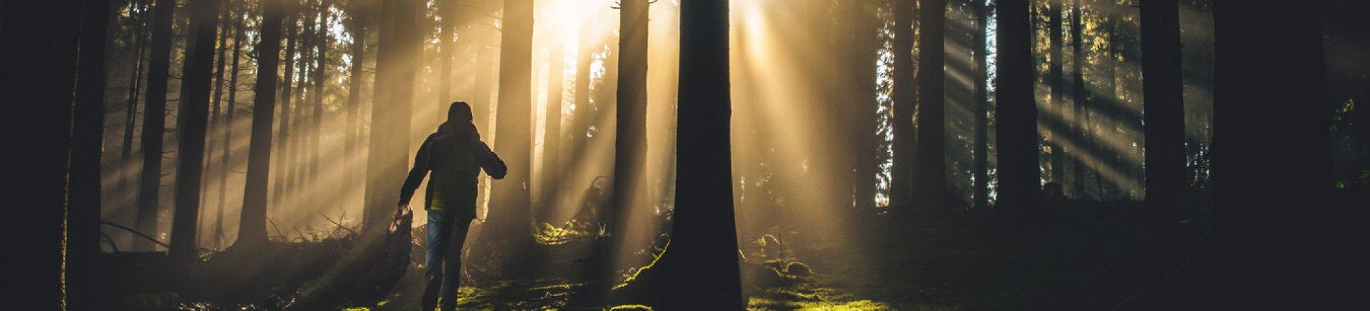 forest walks Ireland