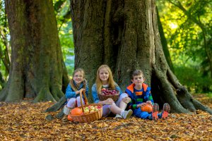 Castlecomer Discovery Park Woodland