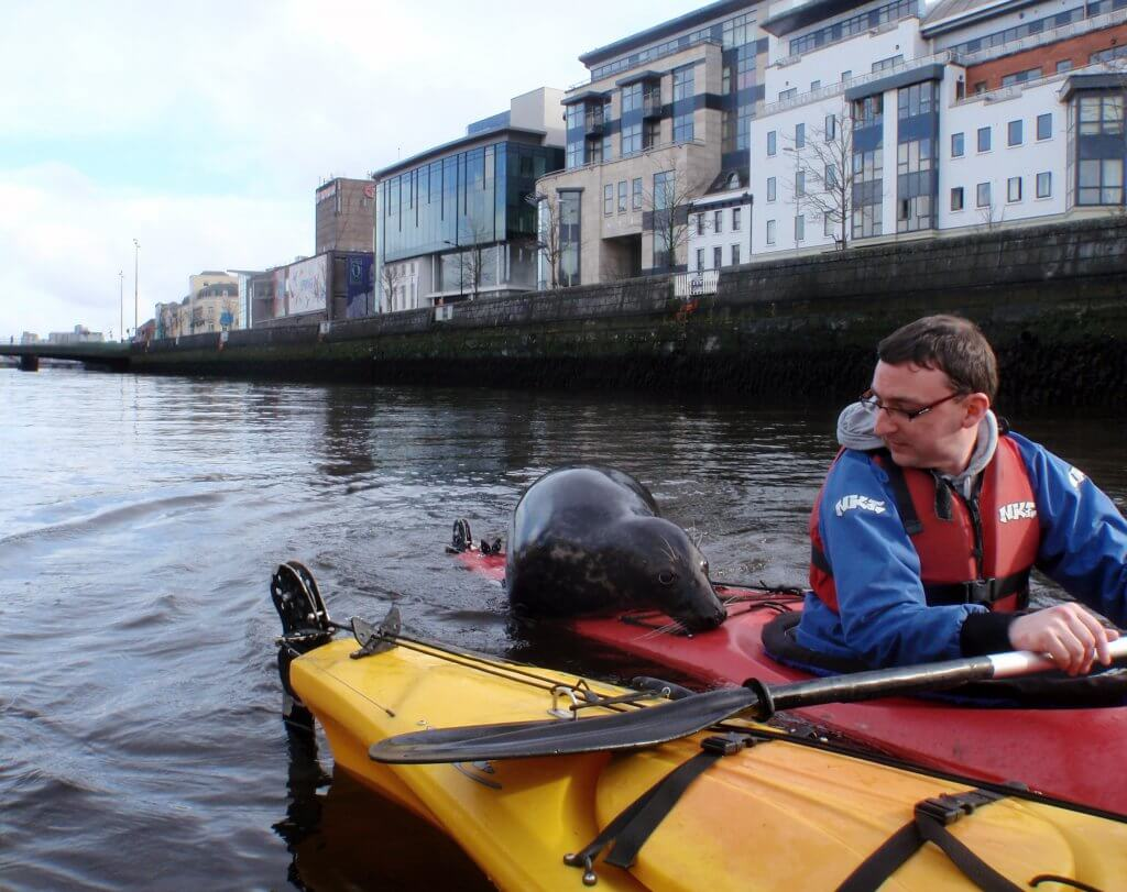 Seal in Cork City.