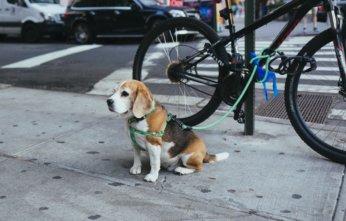 Dog Poo Problem