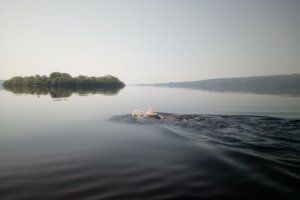 Paddy McDonnell Swimming the Shannon