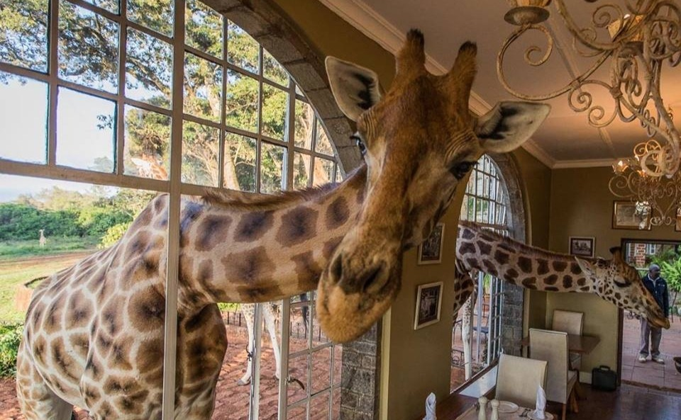 World's wackiest hotels