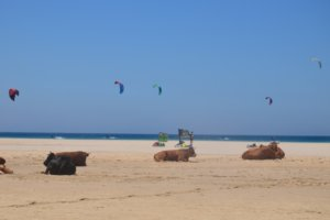 alternative beach holidays tarifa