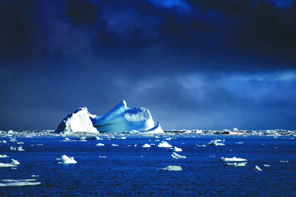 Arctic Polar Bears
